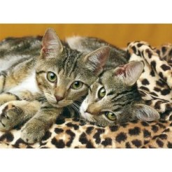 Clementoni 1000 Eyes Of Cats Puzzel 1000 stukjes